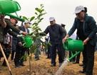 Chủ tịch Quốc hội tham gia trồng hơn 2.000 cây xanh tại Hòa Bình