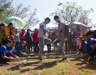 Rộn ràng lễ hội đình làng Tuý Loan ở Đà Nẵng