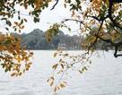 Nao lòng với Hà Nội mùa cây thay lá
