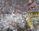 Mưa đá khá lớn ở Điện Biên gây hư hại nhiều cây cối, hoa màu