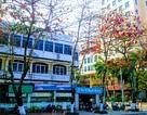 Ngắm Đà thành đẹp mơ màng vào mùa cây thay lá