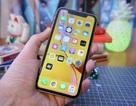 """Chuyện """"ngược đời"""" về chiếc iPhone bán chạy nhất hiện nay"""