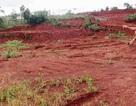 Nguyên trưởng phòng nông nghiệp xin cấp đất quốc phòng cho người thân