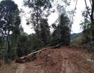 3 đối tượng bị phạt hơn 2 tỉ đồng vì phá rừng phòng hộ