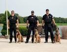 Đặc nhiệm Mỹ mang chó nghiệp vụ tới Hà Nội bảo vệ Tổng thống Trump