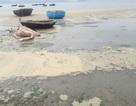 Nước biển Đà Nẵng vàng đục: Lỗi tại các lò bún?