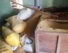 Một gia đình báo mất gần 50 cây vàng giấu trong đống lúa