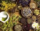 Điểm mặt các loại cây thuốc nam  hỗ trợ chữa tiểu đường tuýp 2 hiệu quả