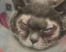 Chi 1.500USD để... phẫu thuật cắt mí mắt cho mèo