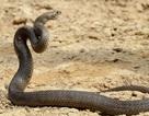 Vườn thú cung cấp dịch vụ cho du khách lấy tên người yêu cũ đặt tên cho rắn độc