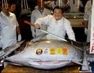 """""""Soi"""" những con cá đắt nhất thế giới, cá ngừ đứng đầu giá 71 tỷ/ con"""