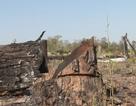 Phá rừng hơn 7ha làm nương rẫy, một đối tượng bị bắt giữ
