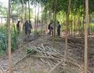 Vụ cưỡng chế 9.700 m2 đất của nguyên Bí thư huyện: Tự nguyện giao đất