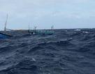 Tàu cá bị tàu nước ngoài đâm chìm, thiệt hại 3 tỷ đồng