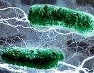 """Các nhà khoa học tìm được loại vi khuẩn """"ăn"""" rác và """"thở"""" ra điện!"""
