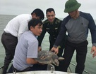 Ngư dân giao nộp rùa quý để thả về biển