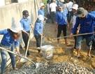 Thanh niên Bình Định vác đá, cõng xi măng làm đường bê tông cho dân