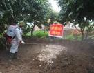 Quảng Ninh: Xuất hiện dịch tả lợn châu Phi, tỉnh ban hành công điện khẩn