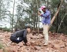 Vụ đào ao nuôi tôm, phá rừng phòng hộ: Dỡ nhà vi phạm, buộc trồng lại cây