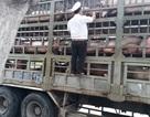 Xử lý các trường hợp giết mổ không đảm bảo vệ sinh an toàn thực phẩm