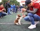"""Hơn 250 chú chó bản địa tham gia """"hội thi sắc đẹp"""" ở Hà Nội"""