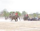 Đắk Lắk: Tưng bừng hội đua voi Buôn Đôn