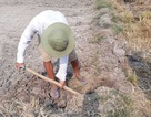 Nông dân Vĩnh Long ồ ạt bán đất mặt ruộng