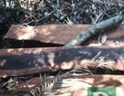 Dựng lại hiện trường vụ phá rừng gỗ quý tại VQG Phong Nha - Kẻ Bàng