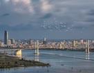 Hai dự án thống nhất dừng xây cao ốc ven bờ sông Hàn