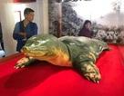 Tiêu bản cụ rùa hồ Gươm đã được đưa vào đền Ngọc Sơn