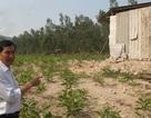 Thực hư việc doanh nghiệp xây dựng nhà xưởng trên đất của dân ở Bình Định!