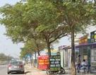 Đà Nẵng: Buộc tháo dỡ các ki-ốt kinh doanh bất động sản trái phép