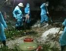 Hỗ trợ Quốc tế giúp Việt Nam chống dịch tả lợn Châu Phi