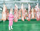 Thịt heo sạch vững vàng trong tâm bão dịch