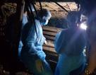 Thanh Hóa: Thêm hai huyện xuất hiện dịch tả lợn châu Phi