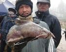 """Tứ """"độc"""" đặc sản cá cực hiếm ở miền núi, có tiền cũng khó mua"""