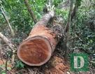 Vụ phá rừng nghiêm trọng tại Quảng Bình: Cách chức Trạm trưởng trạm bảo vệ rừng