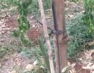 Chỉ đạo công an điều tra vụ phá gần 2.000 gốc chanh dây