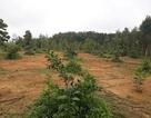 Mua đất quy hoạch của xã, hàng chục hộ dân chờ 15 năm vẫn chưa được cấp sổ đỏ