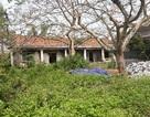 Nghệ An: Doanh nghiệp thuê đất rồi bỏ hoang,chính quyền thiếu đất xây phòng học