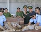 Phát hiện hơn 9 tấn hàng nghi là ngà voi bọc gỗ để nguỵ trang