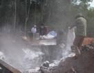 Tỉnh Đắk Lắk công bố dịch lở mồm long móng trên đàn heo