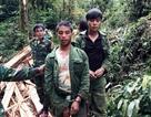 Bắt hai đối tượng người Lào chặt hạ cây sa mu ở khu bảo tồn