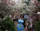Ngắm hàng vạn cành hoa anh đào khoe sắc bên hồ Gươm