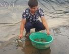 Nghề lạ ở Ninh Bình: Cân cát lấy tiền, cứ 1 kg bán hơn 1 triệu đồng