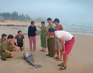 Cá voi gần 2m trôi dạt bờ biển Hà Tĩnh