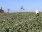 """Triệu tập nhiều đối tượng vụ côn đồ cướp """"bát cơm"""" của nông dân nghèo tại Phú Yên"""