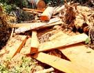 Phát hiện vụ phá rừng phòng hộ Đắk Mi
