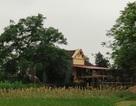 Thanh Hóa: Cán bộ xã xây nhà trái phép trên đất giao thầu