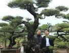 """Ra tay giải cứu hàng chục """"cụ cây"""", người đàn ông có ngay vườn bonsai """"triệu đô"""""""